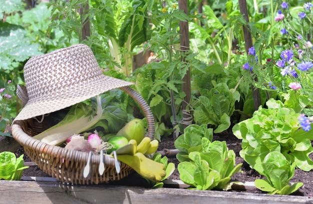Свежие овощи в плетеной корзине со шляпой в цветущем огороде