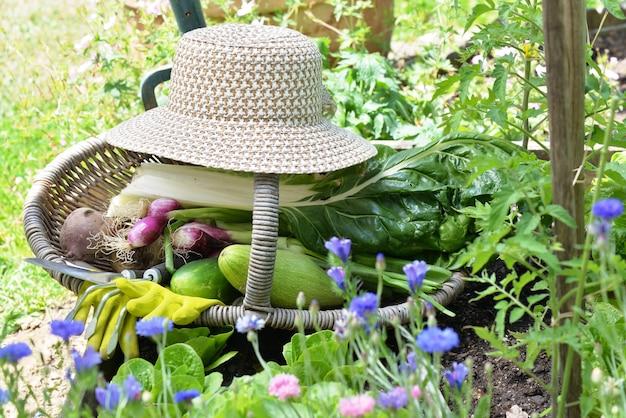 Свежие овощи в плетеной корзине со шляпой в огороде