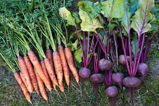 Свежие овощи на огороде