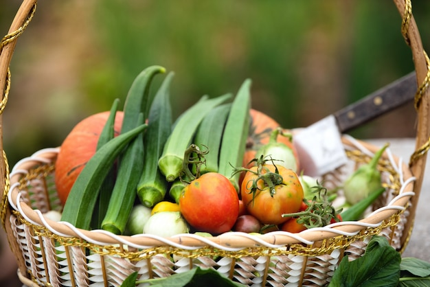 Fresh vegetables organic in basket, harvasted tomato and many vegetables organic