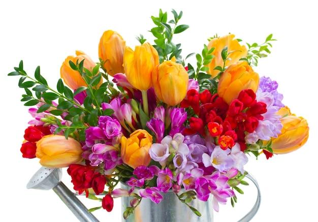 白で隔離の新鮮な紫と赤のフリージアとオレンジ色のチューリップの花