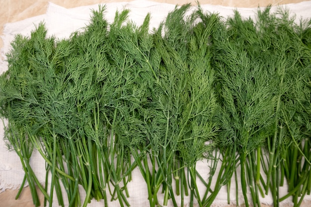 Fresh washed green dill sprigs on the kitchen table