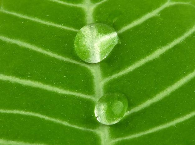 Капли пресной воды на зеленом листе растения