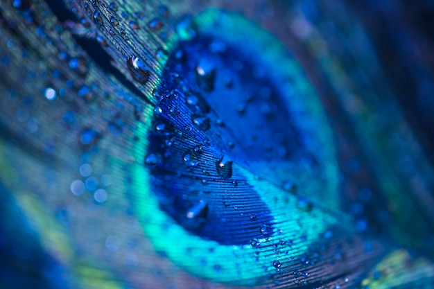 Fresh water drops on peacock feather background