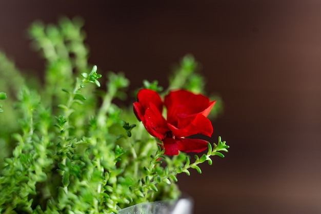 Fresh watercress grass sprouts with water droplets and a red flower close up
