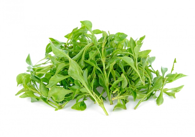 Fresh watercress isolated on white background