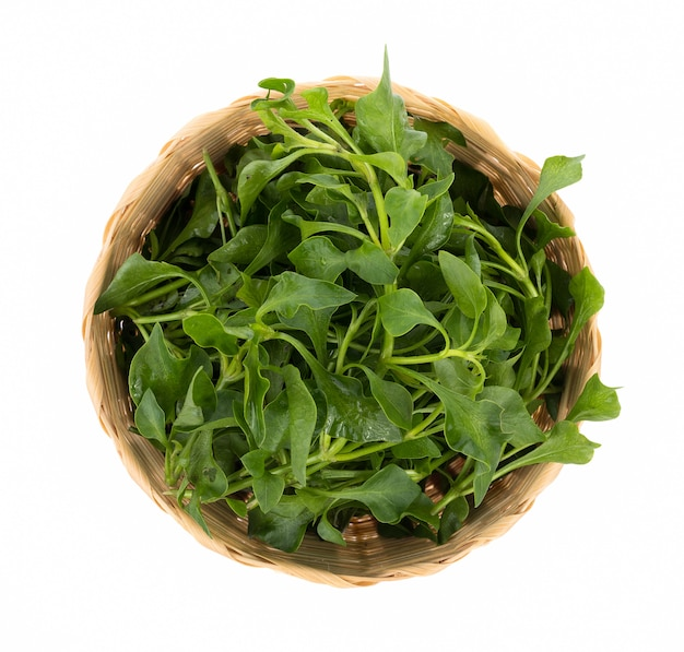 Fresh watercress isolated