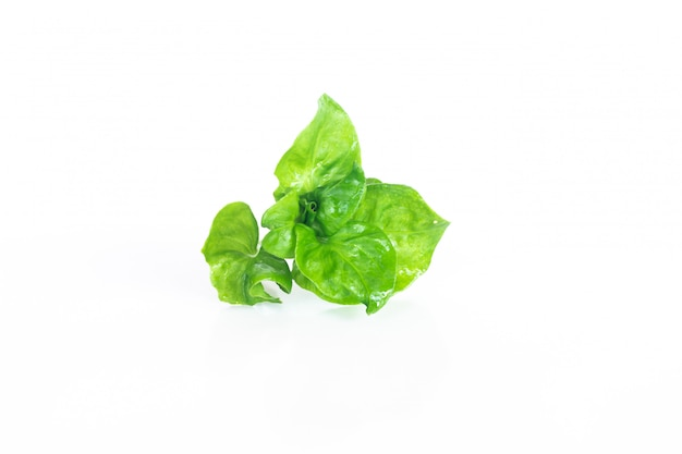 Fresh watercress organic vegetable on white  , isolated vegetable object