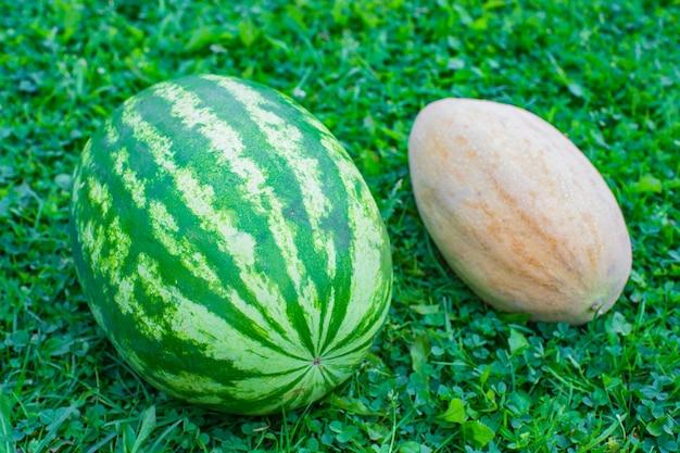 신선한 수박과 멜론은 정원의 푸른 잔디에 누워 건강한 음식 개념을 수확합니다