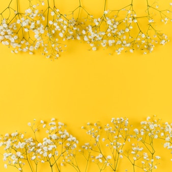 Fresh white gypsophila against yellow background