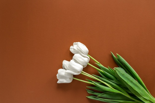 Fresh white tulips bouquet flatlay on the brown wall text place, copyspace.