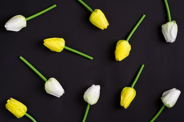 Fresh white and yellow tulips flowers on a black background. top view.