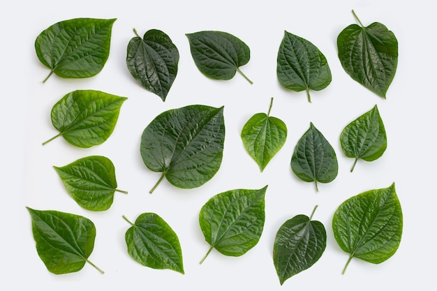 신선한 야생 구장 잎에 고립 된 흰색 배경