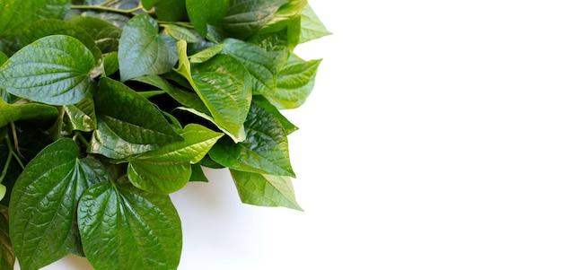 Fresh wild betel leaves isolated on white background