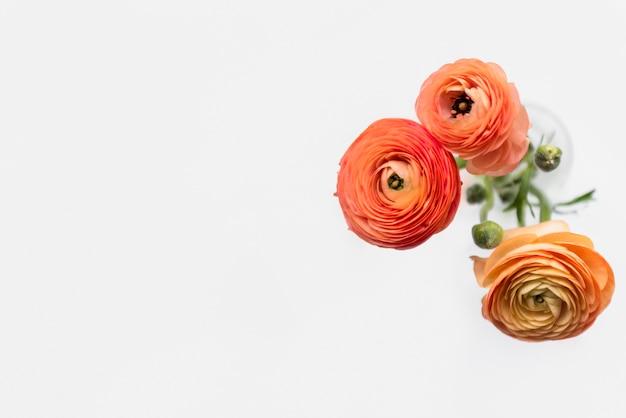 Свежие чудесные цветы на стеблях в вазе Бесплатные Фотографии