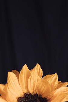 Fresh yellow bloom with dark center in dew