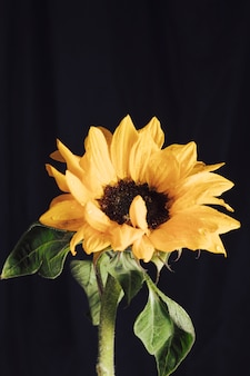 Fresh yellow flower with dark center in dew