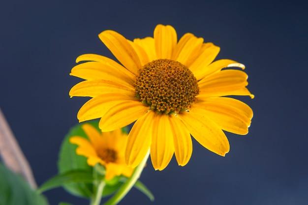 Свежий желтый цветок с лепестком. ботаника и цветы