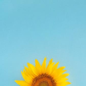 日当たりの良い青い背景に新鮮な黄色のモダンなヒマワリ。現代の夏のガーデニング熱帯のジャングルフラットはコピースペースで横たわっていた