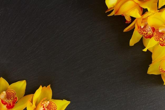 コピースペースと黒のフレームに新鮮な黄色の蘭の花