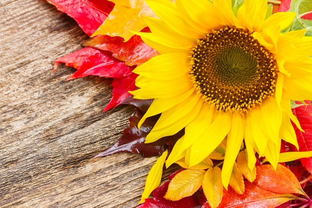 Fresh  yellow sunflower and fall leaves on wooden background