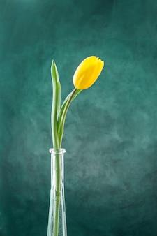 Fresh yellow tulip on green stem in narrow vase
