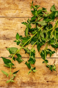 Fresh young melissa, balm mint. traditional ingredient for cooking
