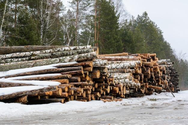 갓 잘게 썬 소나무와 자작나무 통나무가 더미로 쌓여 있습니다. 겨울에 목재를 수확합니다.
