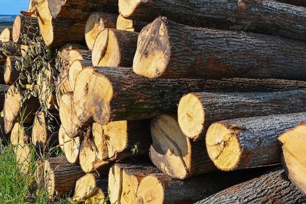 갓 다진 소나무 통나무가 더미로 쌓여 있습니다. 목재 수확. 장작은 재생 가능한 에너지 원입니다.