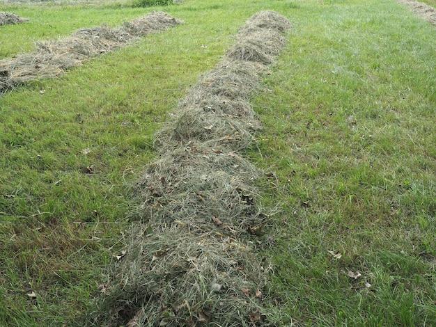切りたての干し草