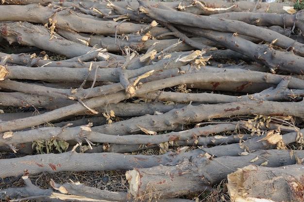 바닥에 나무 통나무를 갓 잘라