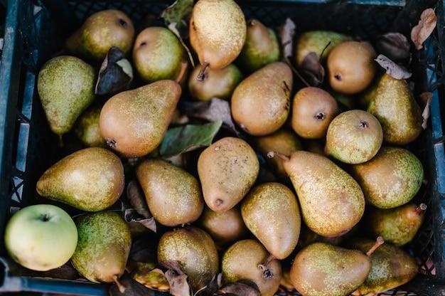 プラスチックの木枠で収穫したてのジューシーで風味豊かな黄色の梨
