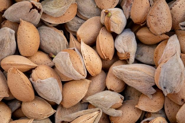 Freshly picked almonds