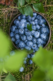 Freshly picked blueberries on a moss in forest concept for healthy eating