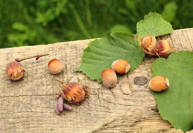 Freshly picked hazelnuts on lying on the old board, on a green background