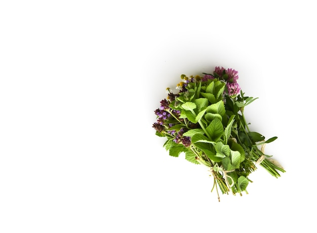 Freshly picked medical herbs hanging on white background