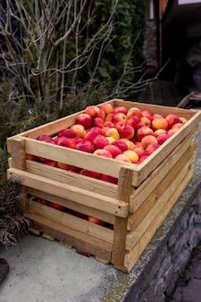 Свежесобранные красные яблоки в большом деревянном ящике