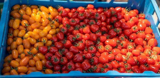木枠に入れて摘みたての赤いトマト。