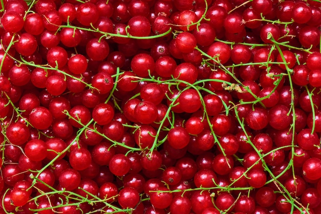 Freshly picked redcurrants background, top view, healthy nutrition