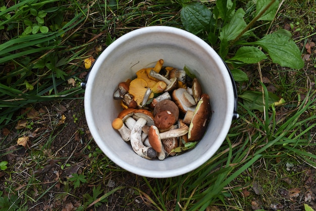 Freshly picked up mushrooms in a white bucket.