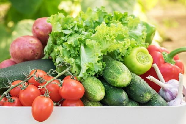 Свежесобранные овощи в ящике помидоры огурцы болгарский перец чеснок салат