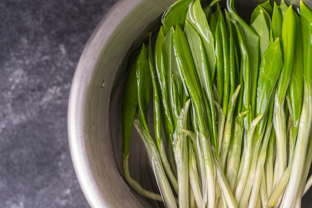 Freshly picked wild garlic leaves for washing in water in a metal bowl, close up, top view. healthy leaves of green wild leek