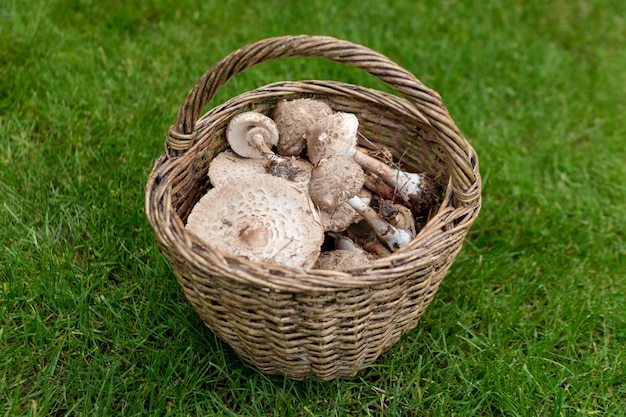 Freshly picked wild mushrooms from the local forest
