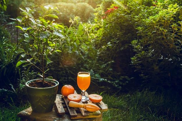 Свежевыжатый апельсиновый сок в саду.