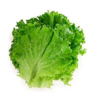 Свежий зеленый лист салата на белой поверхности