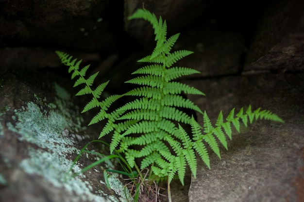신선도 돌과 검은 색에 펀의 녹색 잎. 고 사리 잎의 근접 촬영 샷.