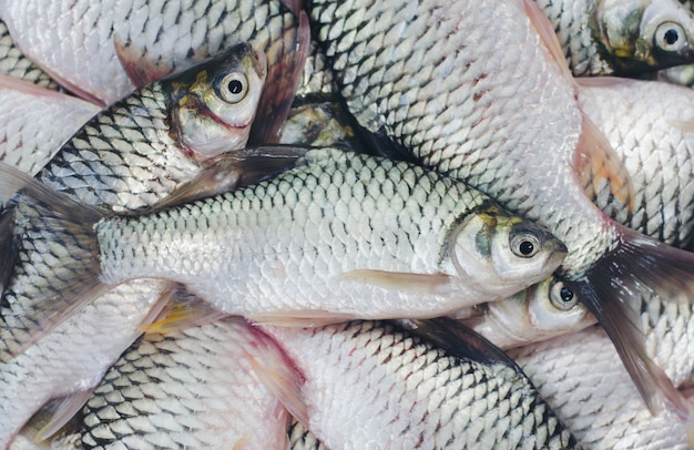 민물 고기 barbonymus gonionotus 물고기