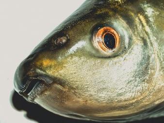 Freshwater Fish food