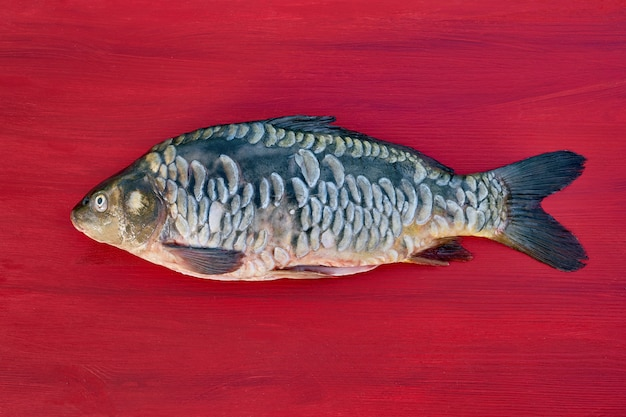 Freshwater fish. mirror carp