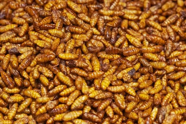 Fried silkworm close up, thai street food market
